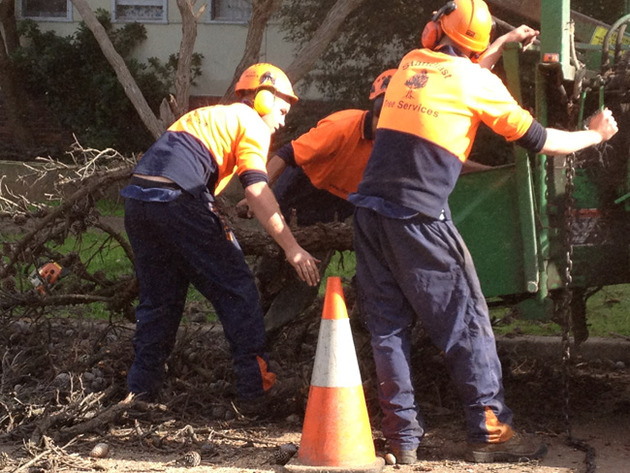 Standfast Tree Services Northern Beaches