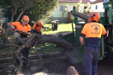 stump grinding northern beaches