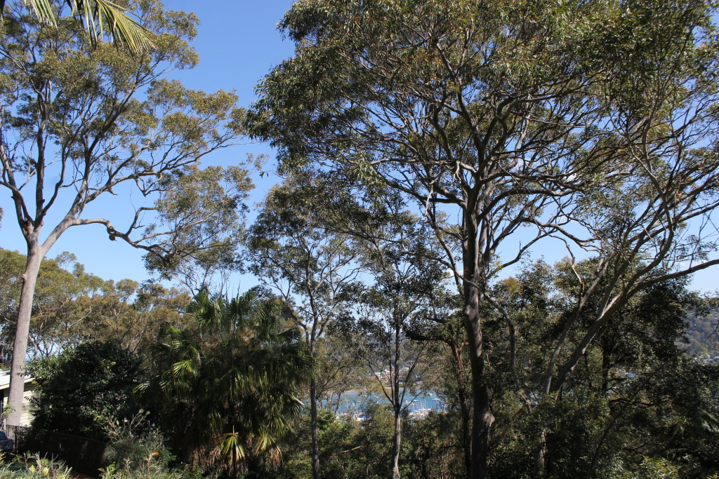 Northern Beaches tree services