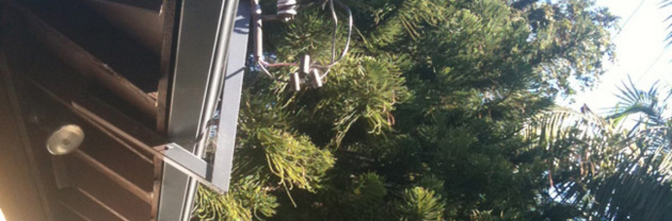 tree pruning newport