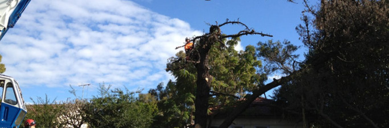 tree removal northern beaches nsw